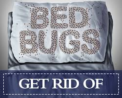 How To Get Rid Of Bugs In A Mattress Permanently