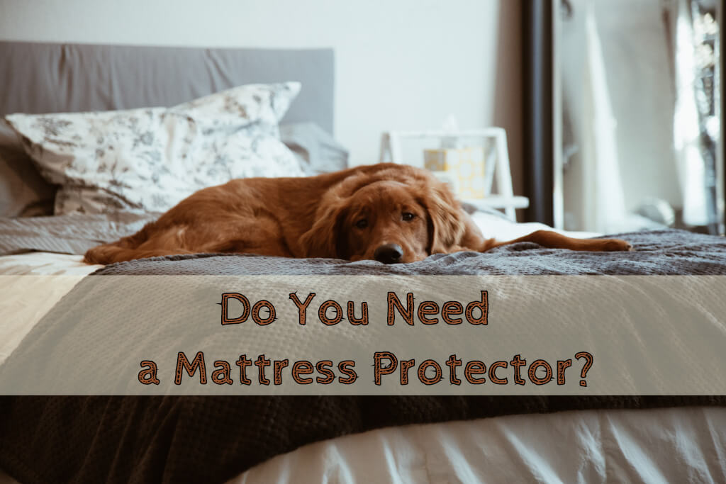 5 Reason You Need Mattress Protector – Tips & Uses